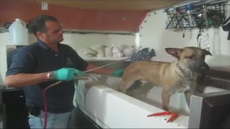 Jorge Diaz accused of pretending to be a veterinarian (Source: KPHO/KTVK)