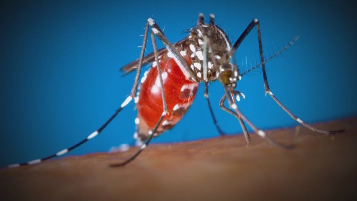 Mosquitoes from the monsoon could increase the number of cases of the Zika virus in Arizona. (Source: KTVK)