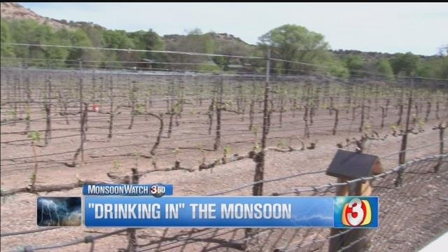 Did you know the monsoon contributes to Arizona's growing wine industry? (Source: 3TV)