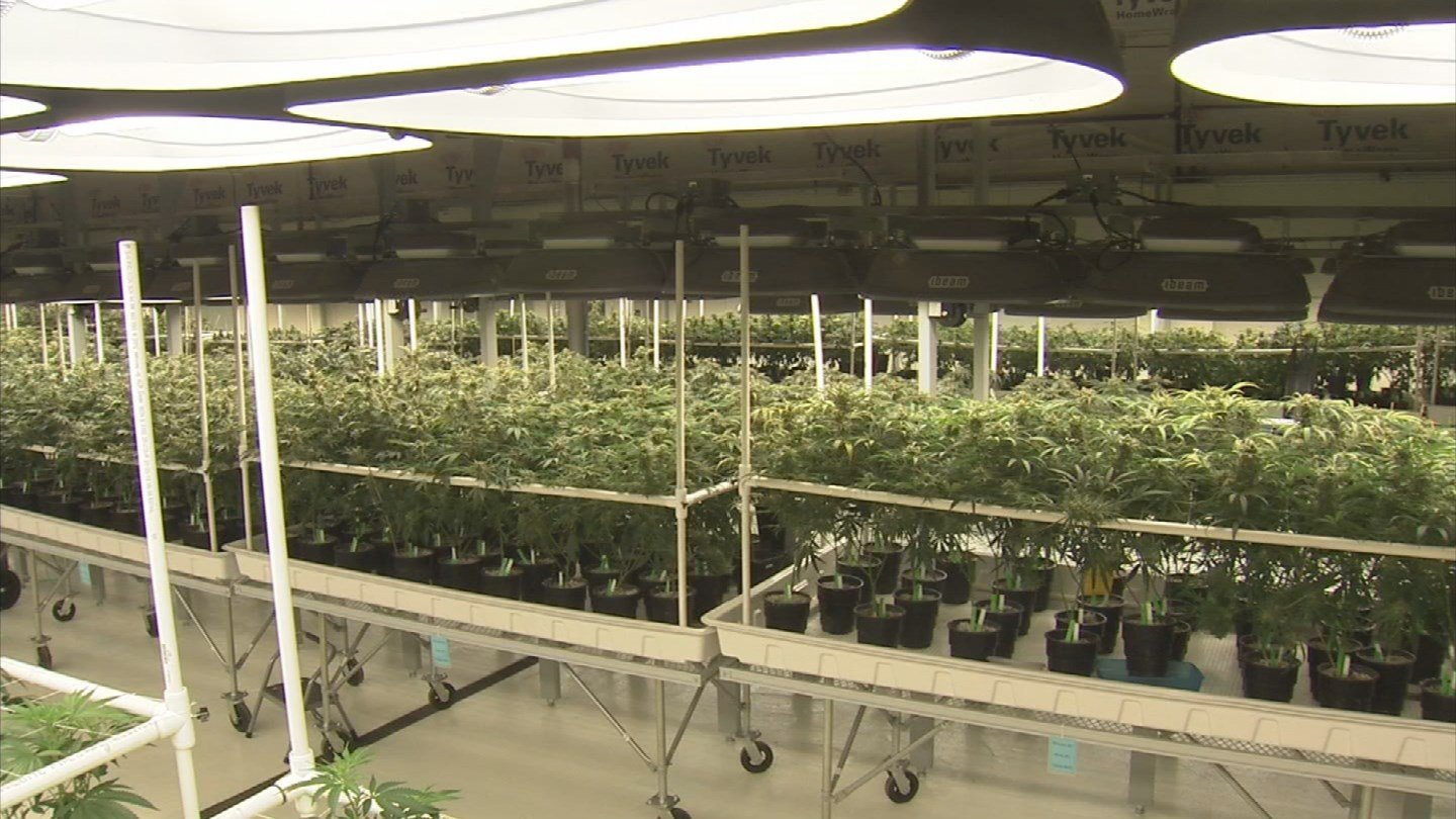 Marijuana may be beneficial for kids with certain disorders. (Source: 3TV)