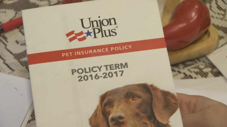 The pet insurance is through Union Plus. (Source: KPHO/KTVK)