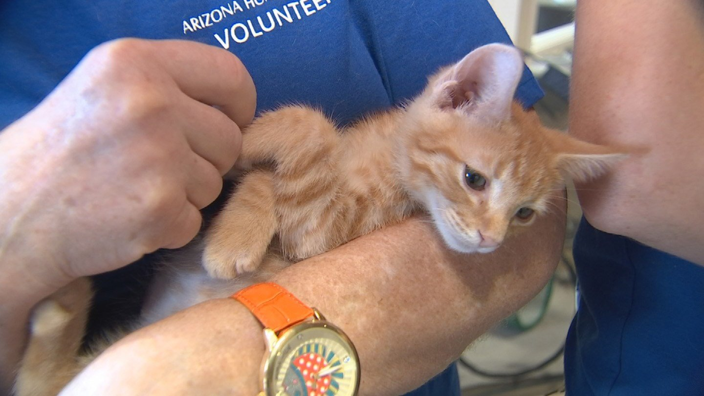 One of the animals helped by viewer donations. (Source: KTVK)
