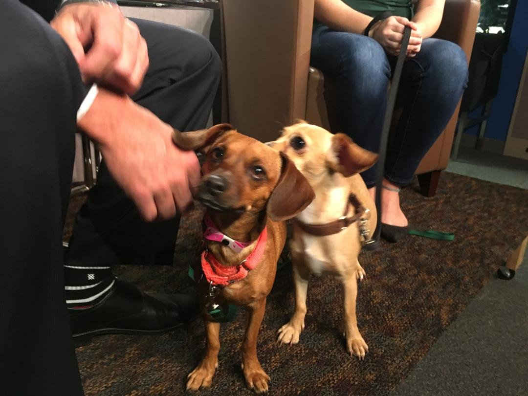 Maddy and Patty looking for a forever home!
