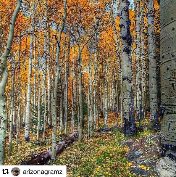 Flagstaff in autumn. (Source: https://www.instagram.com/arizonag)