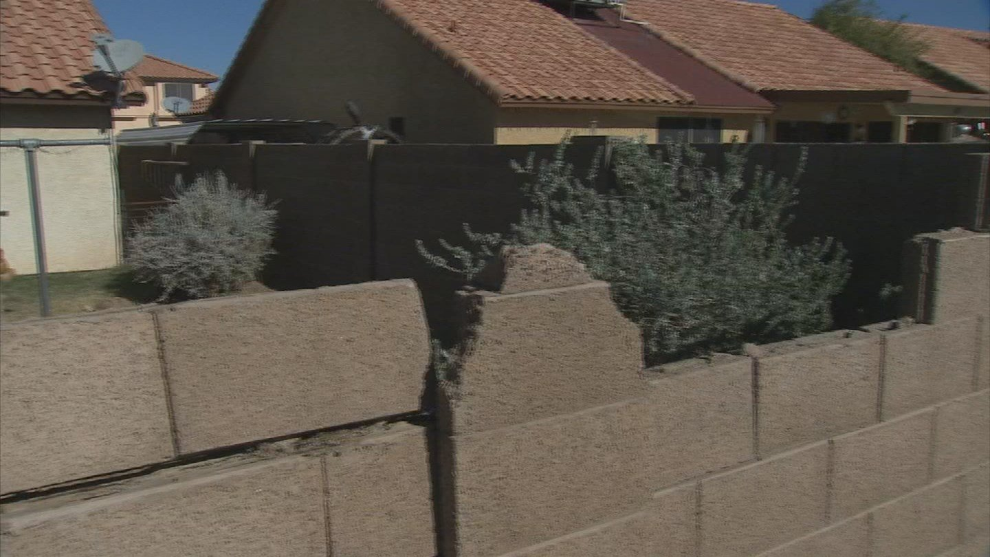 Annie Kudray says a city-owned tree damaged her property but Goodyear wouldn't pay up. (Source: 3TV)