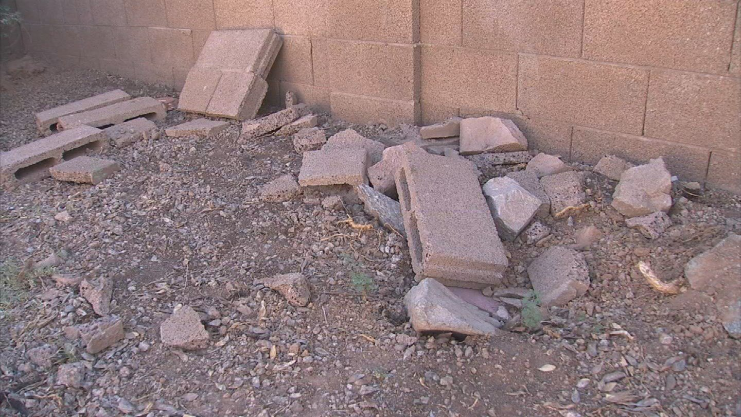 The tree damaged Kudray's wall and a cactus. (Source: 3TV)