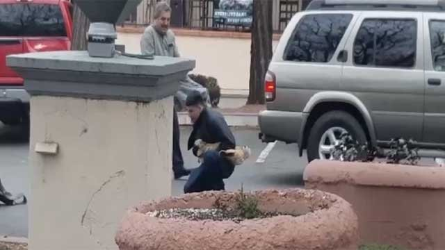 A bobcat attacked four people in Sedona on Jan. 12. (Source: Photo taken from video captured by Athena Belton)