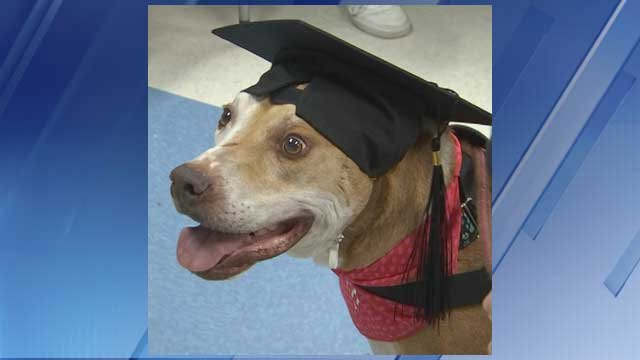 Rocko attended his graduation at Chandler-Gilbert Community College. (Source: 3TV/CBS 5)