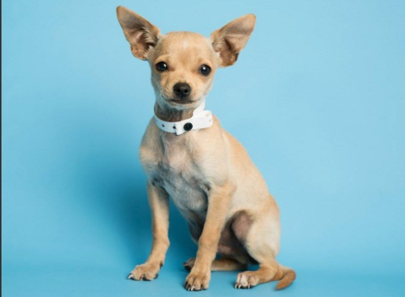 Trotter the puppy (Source: Arizona Humane Society)