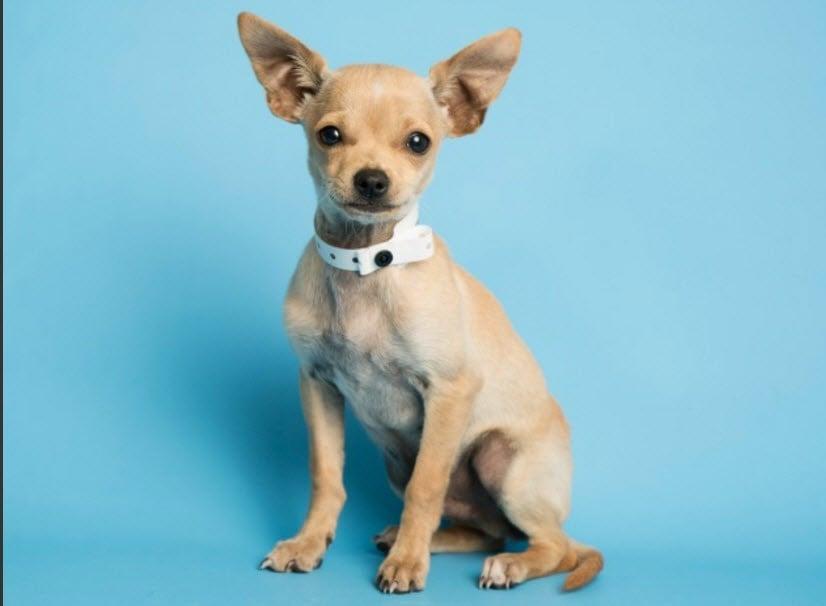 Trotter the puppy (Source: Arizona Humane Society)