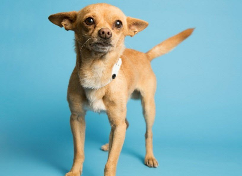 Sugar, Trotter's mom  (Source: Arizona Humane Society)