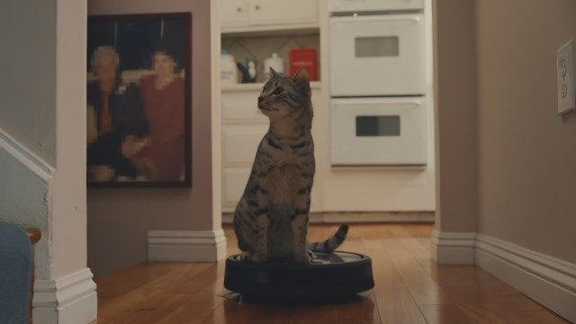 Roomba cats (Source: GoDaddy via YouTube)