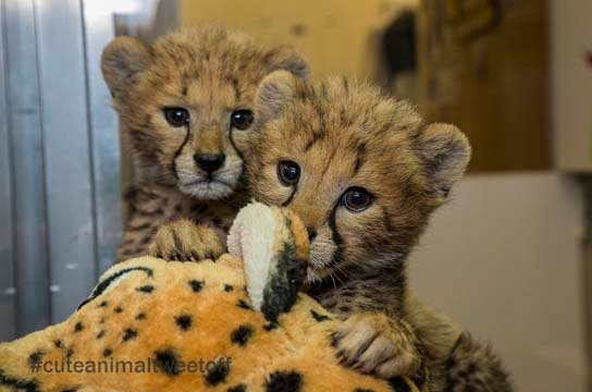 (Source: San Diego Zoo via Twitter)