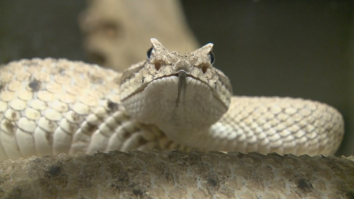 The measure would allow gun owners to shoot rats and snakes inside city limits. (Source: 3TV/CBS 5)