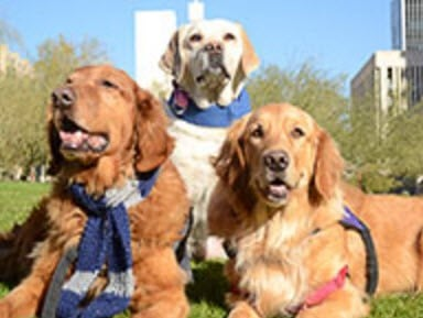 Sam (now retired, Tori and Elle (Source: Maricopa County Attorney's Office)