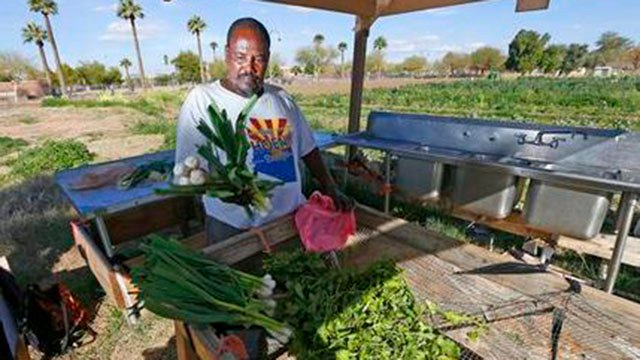 In this Feb. 7, 2017 photo, Tareke Tekie, originally from Eritrea, washes freshly picked items from his garden at a 15-acre lot of public gardens in Phoenix. (AP Photo/Ross D. Franklin)