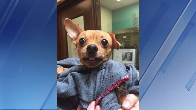 Adoption fees will be waived for 2 hours on Wednesday at Maricopa County Animal Care and Control. (Source: 3TV/CBS 5)