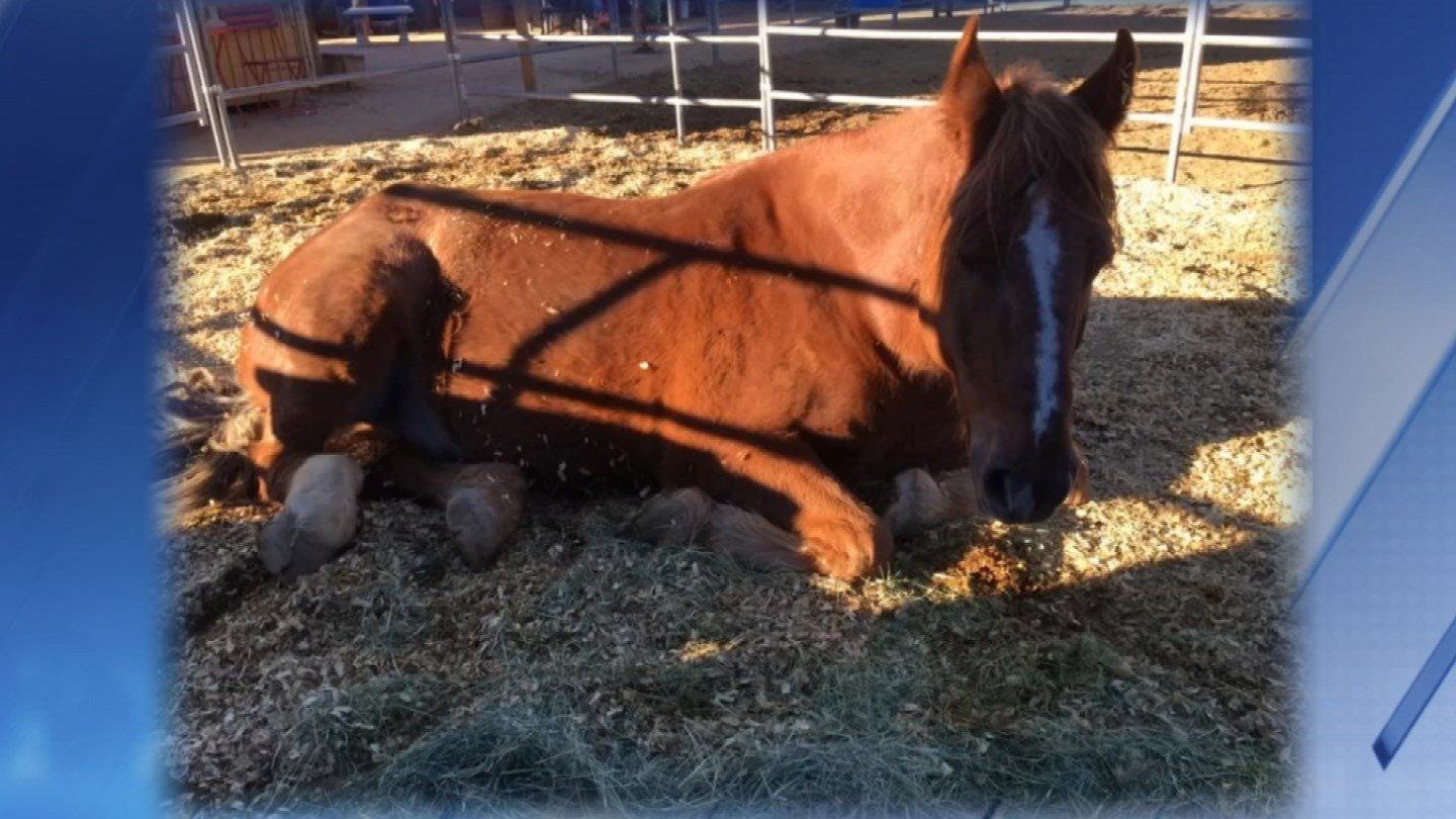 Officer Moose is a 10-year-old draft cross gelding. (Source: Animal Guardian Network)