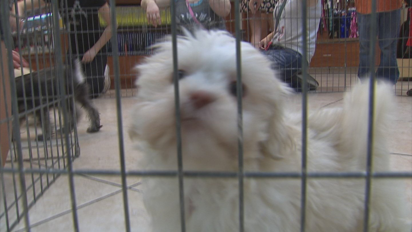 Puppies N Love and Animal Kingdom pet stores keep two years of paper records on all of their breeders. (Source: 3TV/CBS 5)