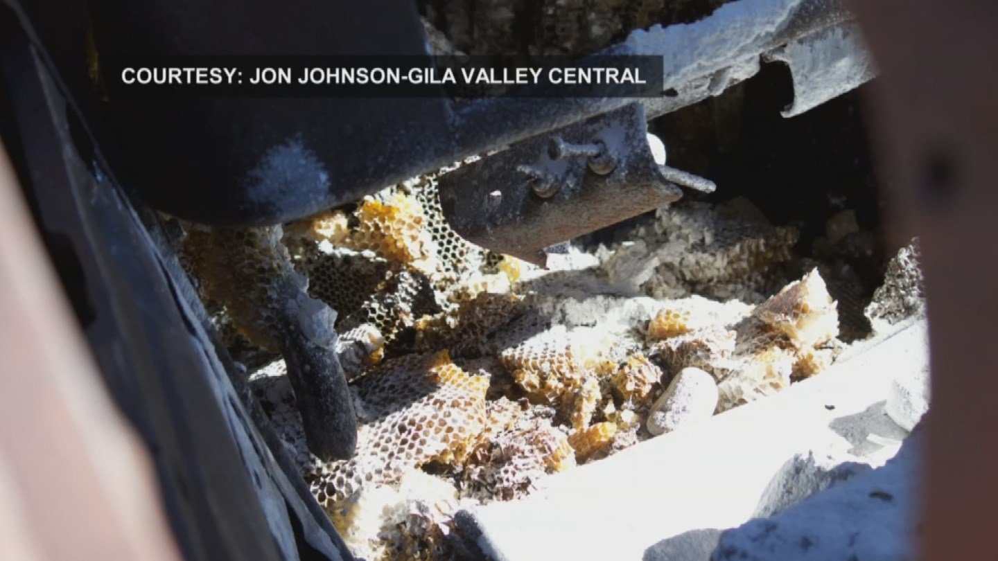 Andrew and a friend were shooting BB guns at an old rusty truck near their home when they mistakenly hit a hidden beehive. (Source: 3TV/CBS 5)