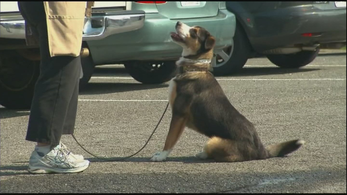 A few pet owners were using their animals to try and get prescription painkillers in parts of the U.S. (Source: 3TV/CBS 5)