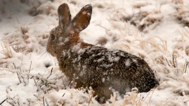 A cold critter in Snowflake, Arizona. (Source: Dave Salge)