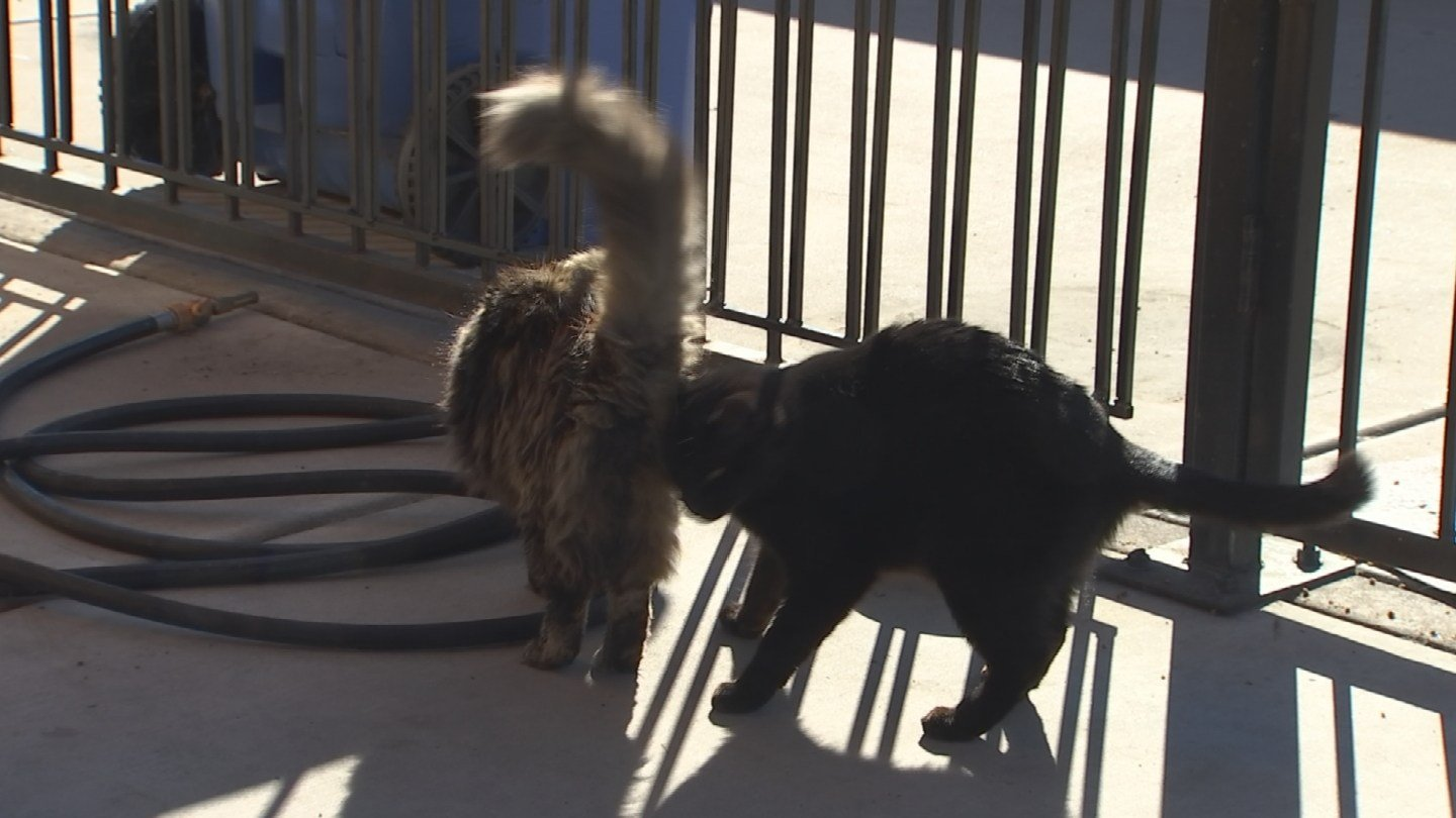 Cats being found dead and mutilated in a Phoenix neighborhood. (Source: 3TV/CBS 5)