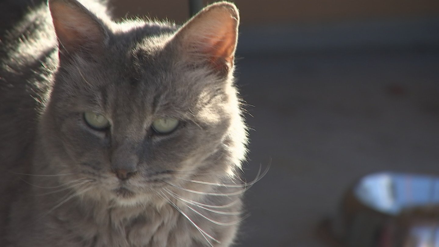 At least one family installed surveillance cameras, fixed on the spot where two cats were found killed. (Source: 3TV/CBS 5)