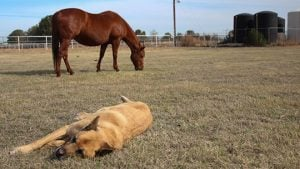 AniCell Biotech, a Chandler-based startup, collects amniotic materials collected during birth at this ranch in Mesa and uses them in a new regenerative treatment for tendons, ligaments, eyes and wounds in dogs and horses. (Source: Erica Apodaca)