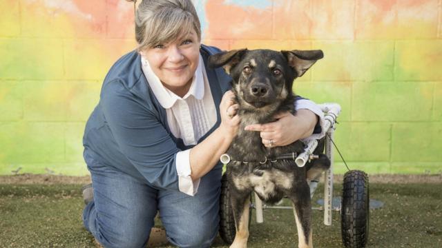 Paralyzed dog found abandoned near Canyon Lake gets a new home. (Source: Arizona Humane Society)