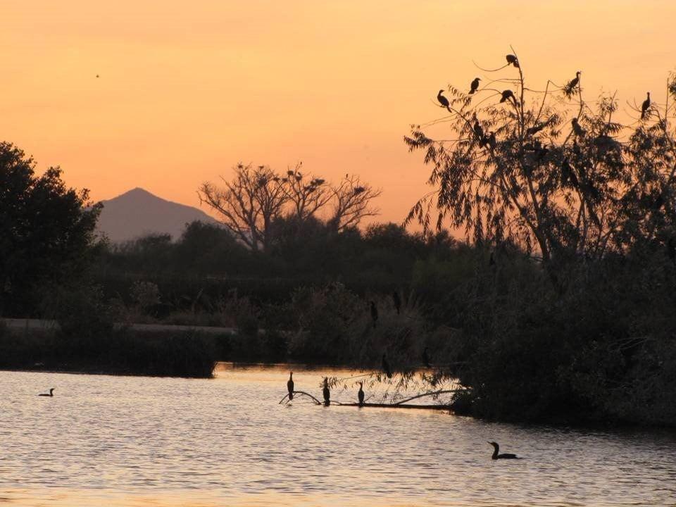 Tres Rios Wetlands (Source: City of Phoenix)