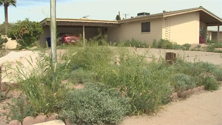 Weeds are starting to grow fast after the heat and the rain. (Source: 3TV/CBS 5)