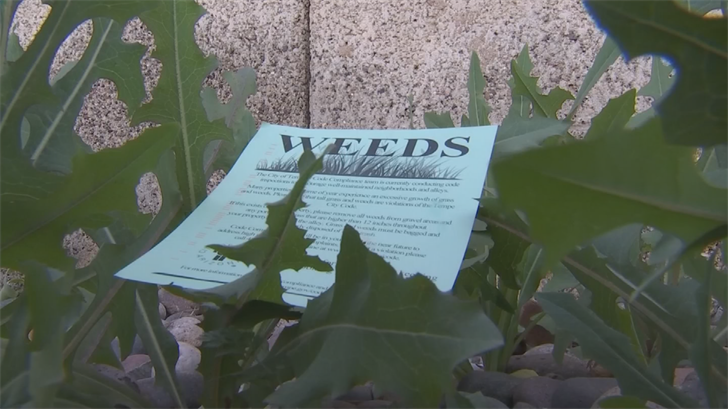 The City of Tempe already issued postcards to homeowners, reminding them excessive weeds, especially weeds above 12 inches, are a code violation. (Source: 3TV/CBS 5)