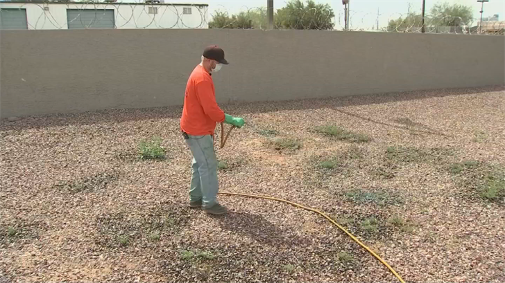 """""""Roundup"""" is a great way to get rid of the weeds. (Source: 3TV/CBS 5)"""