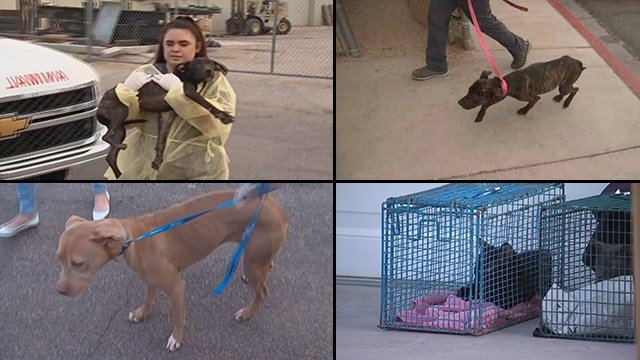 The animals were sick and some were severely underweight. (Source: 3TV/CBS 5)