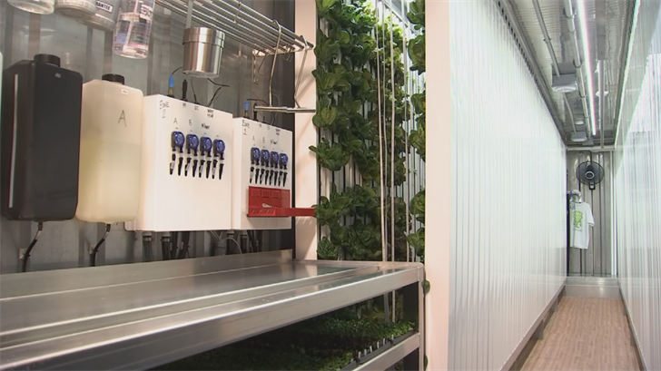Heather and Brian Szymura are growing vegetables inside a shipping container. (Source: 3TV/CBS 5)