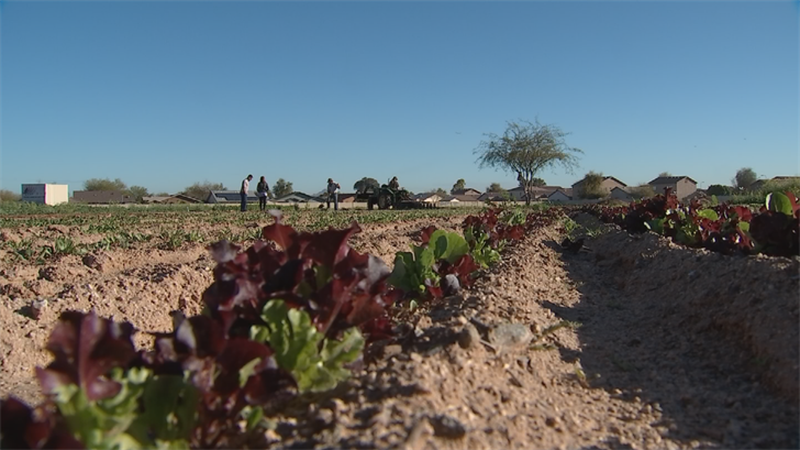 Crops are finally starting to pop up which is creating a lot of excitement. (Source: 3TV/CBS 5)