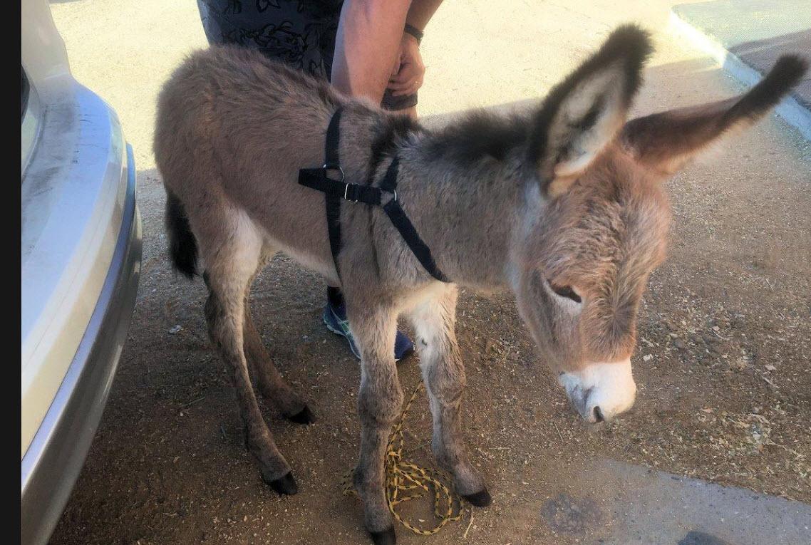 (Source: Arizona Equine Rescue Organization)