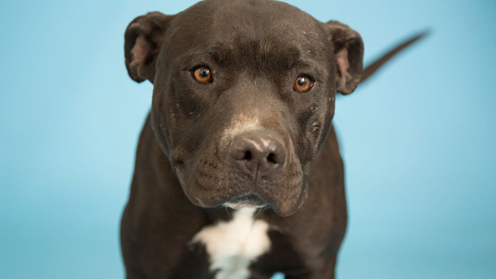 Angel (Source: Arizona Humane Society)