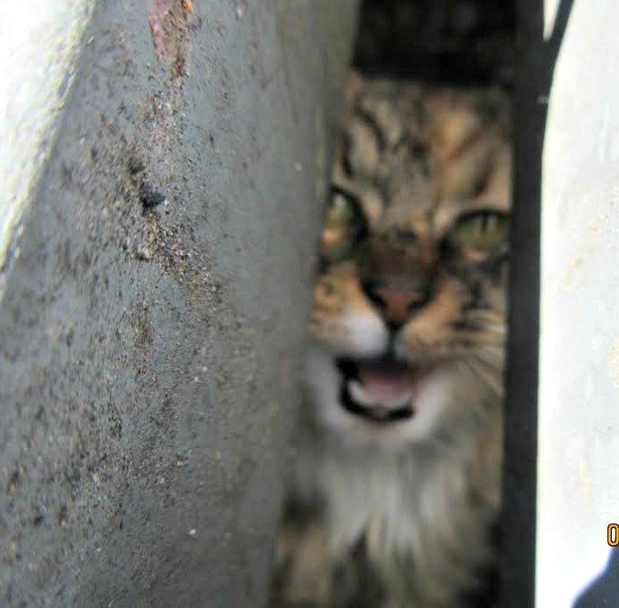 Arizona Humane Society technicians rescue a cat trapped in a storm drain. (Source: Arizona Humane Society)