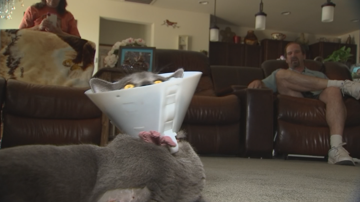 The cat is now recovering. (Source: 3TV/CBS 5)