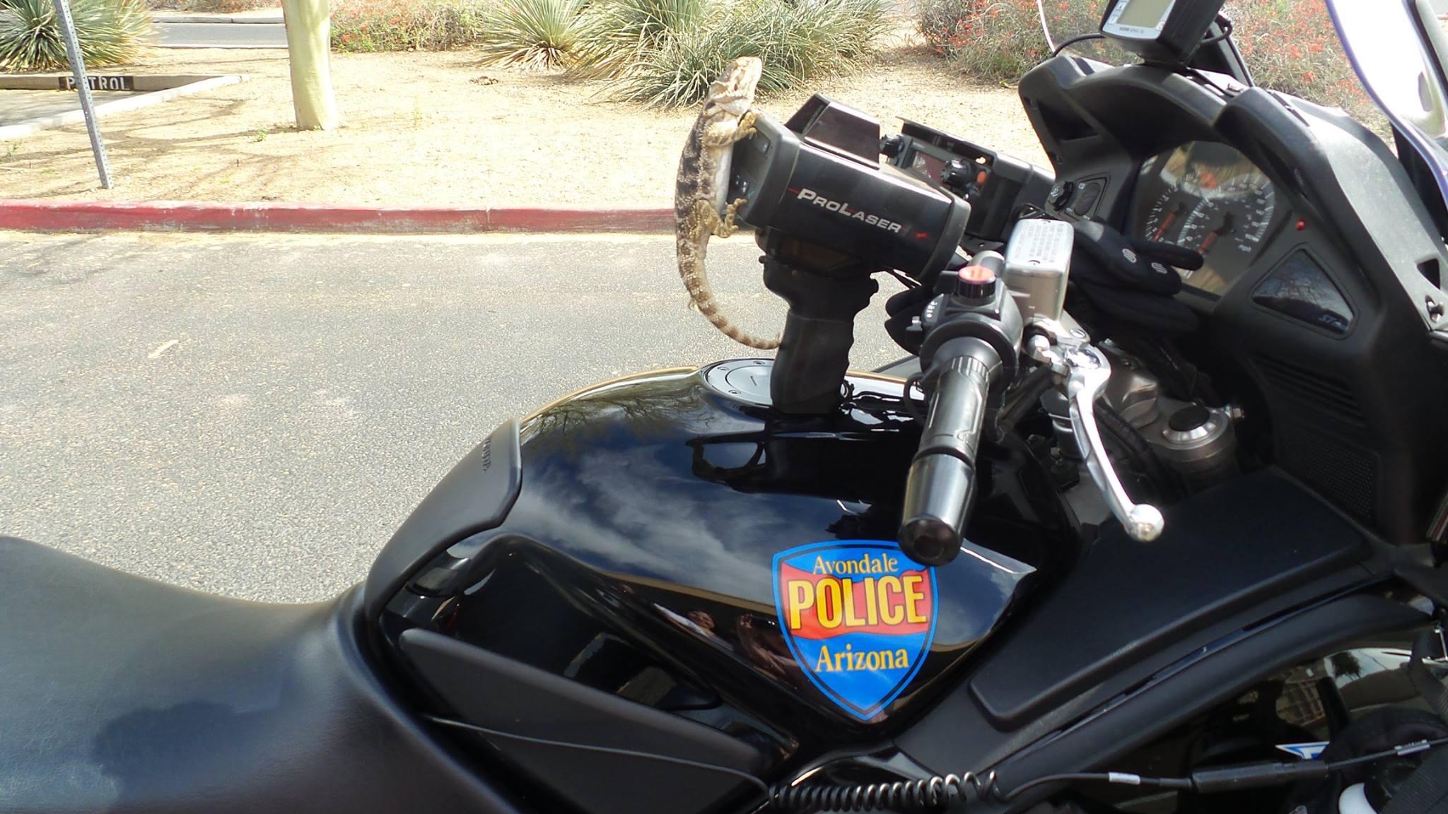 Iroh 'running radar with Motors' (Source: Avondale Police Department via Facebook)