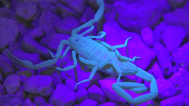 Scorpion season is nearly upon us. (Source: 3TV/CBS 5)