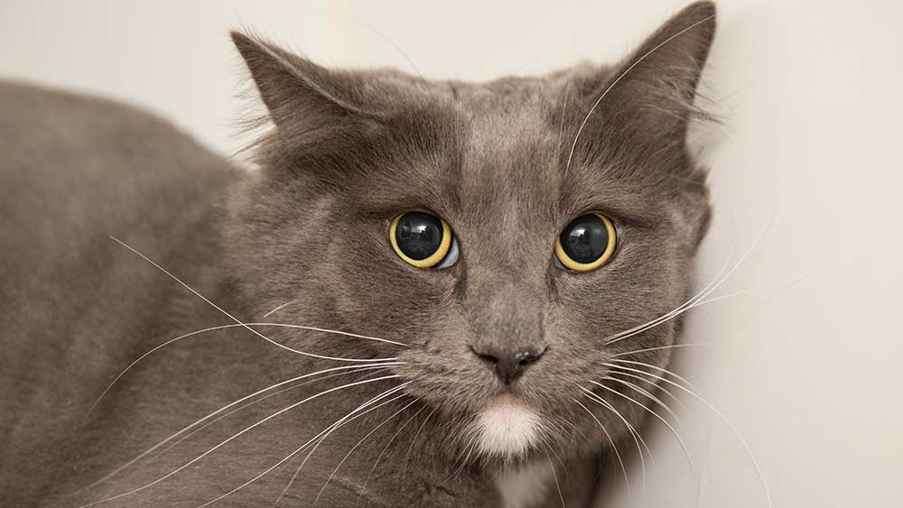 Gandalf (Source: Arizona Humane Society)