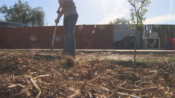 Pueblo Viejo Fields also helps address the food desert issue facing this part of south Phoenix. (Source: 3TV/CBS 5)