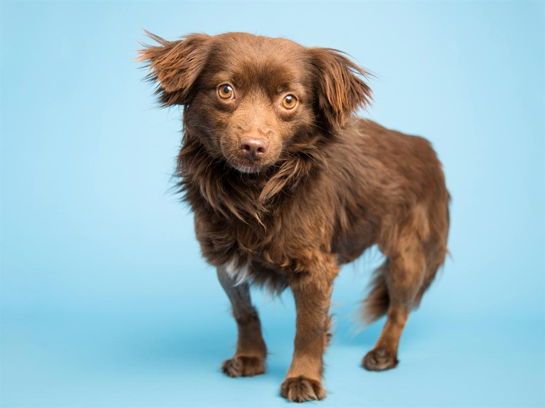 Hershey (Source: Arizona Humane Society)