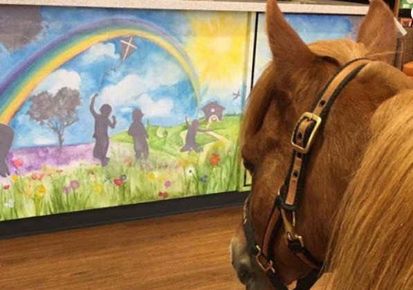 Raleigh, a miniature therapy horse (Source: Go Fund Me)