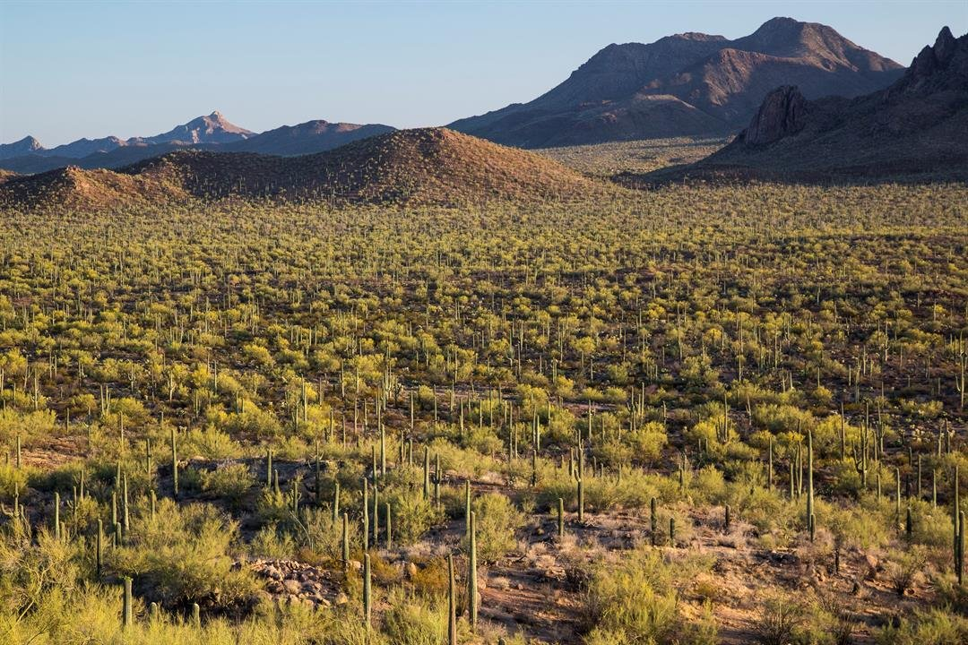The Ironwood Forest National Monument is northwest of Tuscon. (Source: Wikipedia)