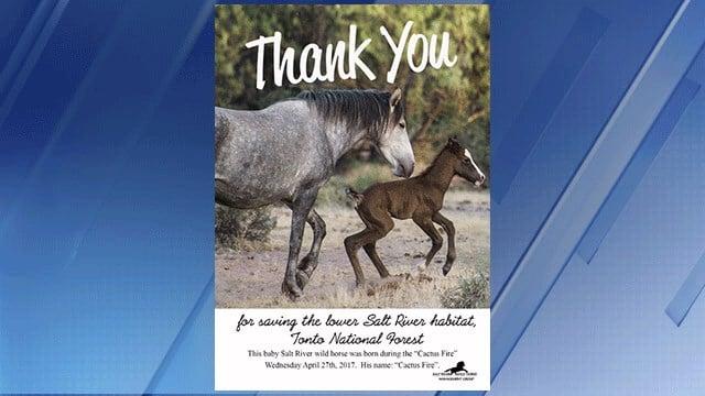 Salt River Wild Horse Management Group