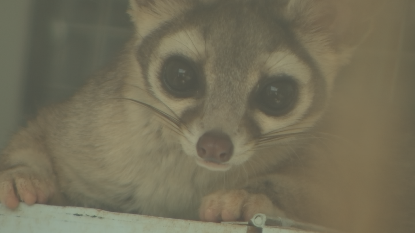 The Arizona Game and Fish Department is trying to raise money to help care for baby animals that have come into their care. (Source: 3TV/CBS 5)